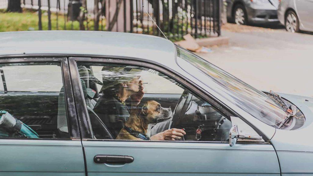 Subject photographed through a car window using manual focus.